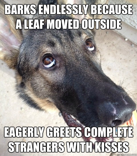 barks endlessly because a leaf moved outside eagerly greets complete strangers with kisses - barks endlessly because a leaf moved outside eagerly greets complete strangers with kisses  Derp Dog