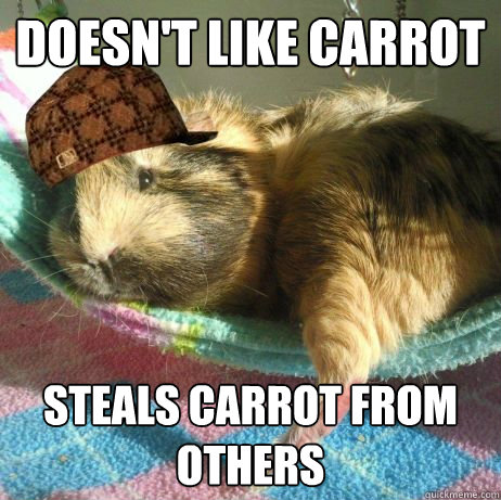 doesn't like carrot steals carrot from others  Scumbag Guinea Pig