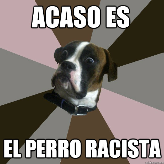 acaso es el perro racista - acaso es el perro racista  Genuinely Surprised Dog