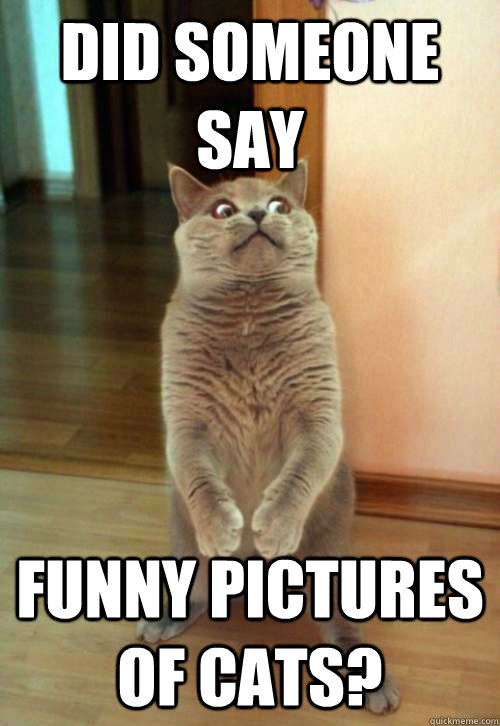 Did someone say funny pictures of cats? - Did someone say funny pictures of cats?  Horrorcat