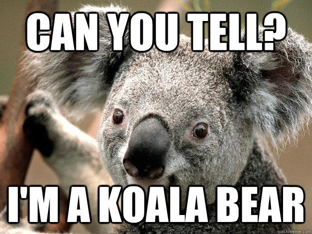 can you tell? I'm a koala bear