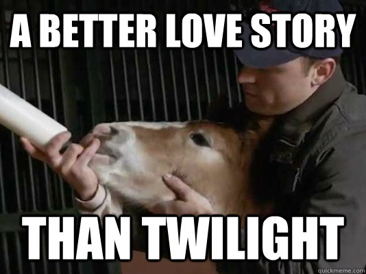 a better love story than twilight - a better love story than twilight  budwiser horse