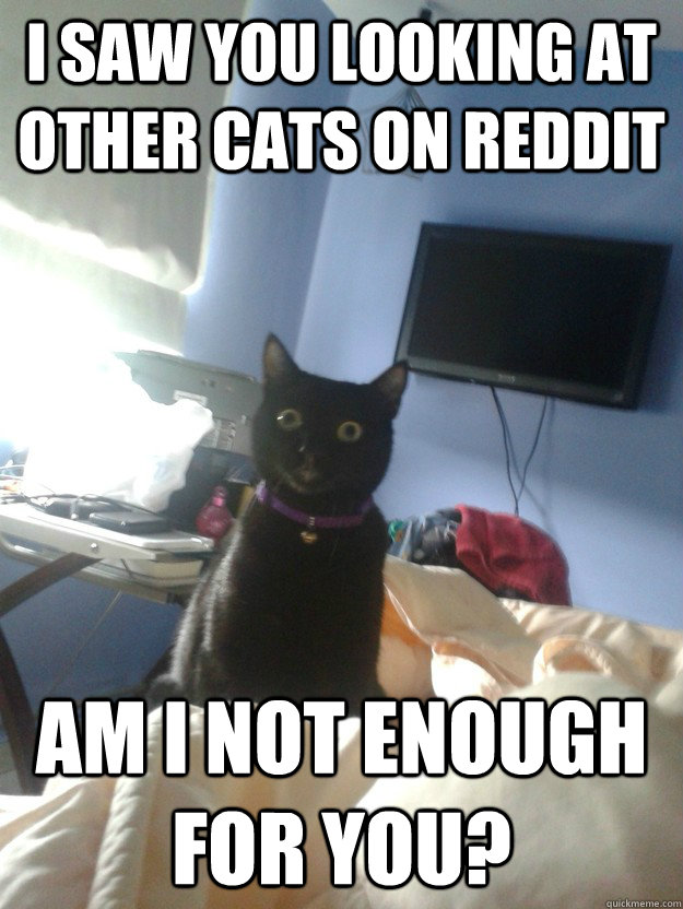 I SAW YOU LOOKING AT OTHER CATS ON REDDIT AM I NOT ENOUGH FOR YOU? - I SAW YOU LOOKING AT OTHER CATS ON REDDIT AM I NOT ENOUGH FOR YOU?  overly attached cat