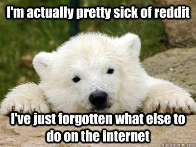 I'm actually pretty sick of reddit I've just forgotten what else to do on the internet - I'm actually pretty sick of reddit I've just forgotten what else to do on the internet  Popular Opinion Polar Bear