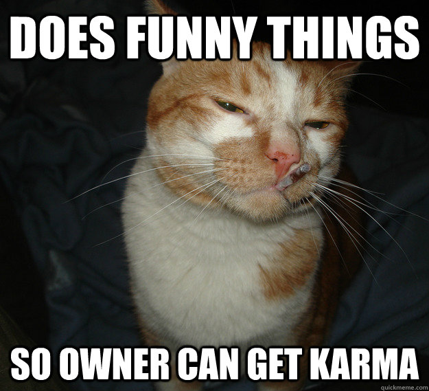 does funny things so owner can get karma