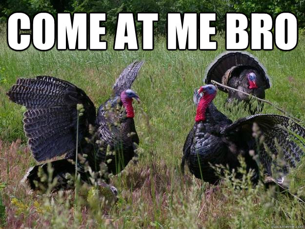Come at me bro  - Come at me bro   Intimidating Turkey