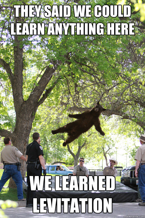 They said we could learn anything here We learned levitation - They said we could learn anything here We learned levitation  Boulder Bear