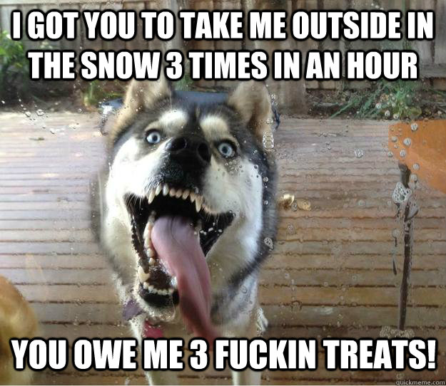 I got you to take me outside in the snow 3 times in an hour you owe me 3 fuckin treats! - I got you to take me outside in the snow 3 times in an hour you owe me 3 fuckin treats!  Overly Attached Dog