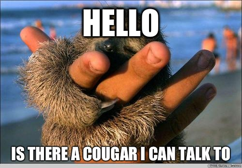Hello Is there a cougar I can talk to   cute baby sloth