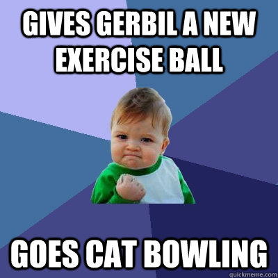 Gives gerbil a new exercise ball goes cat bowling - Gives gerbil a new exercise ball goes cat bowling  Success Kid