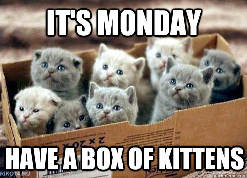 It's Monday Have a box of kittens  Box of Kittens