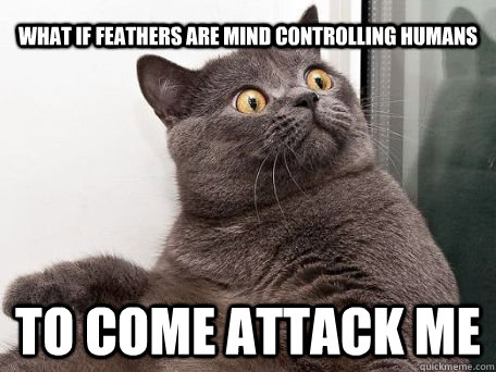 What if Feathers are mind controlling humans to come attack me  conspiracy cat