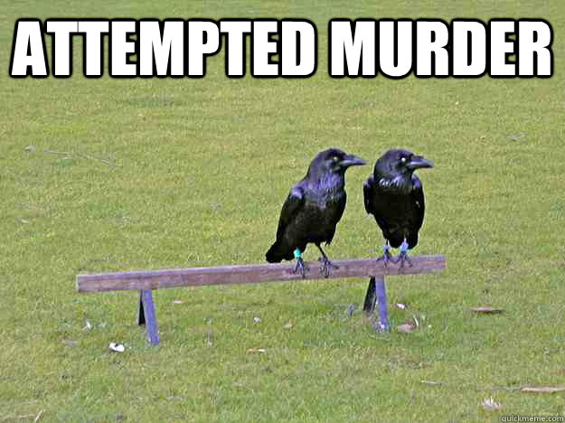 attempted murder  - attempted murder   Crow humor