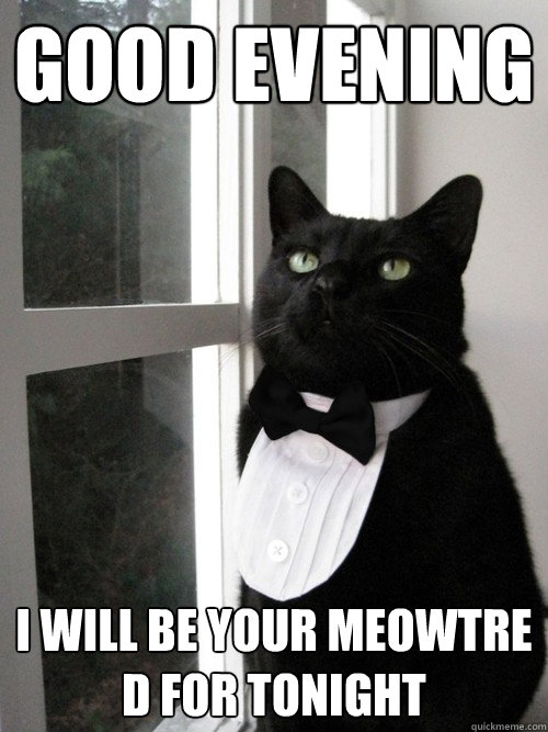 Good Evening I Will Be Your Meowtre D For Tonight Formal Cat