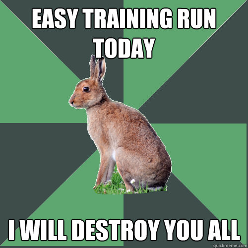 Easy training run today I will destroy you all  Harrier Hare