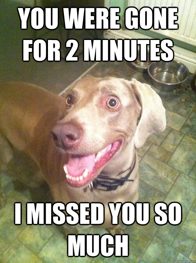 You were gone for 2 minutes i missed you so much - You were gone for 2 minutes i missed you so much  Overly Attached Dog