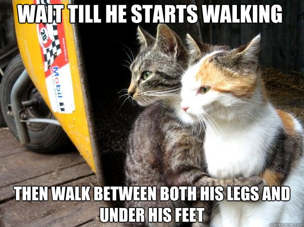 Wait till he starts walking then walk between both his legs and under his feet - Wait till he starts walking then walk between both his legs and under his feet  Restraining Cat