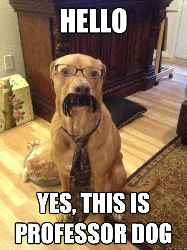 HELLO YES, THIS IS PROFESSOR DOG
