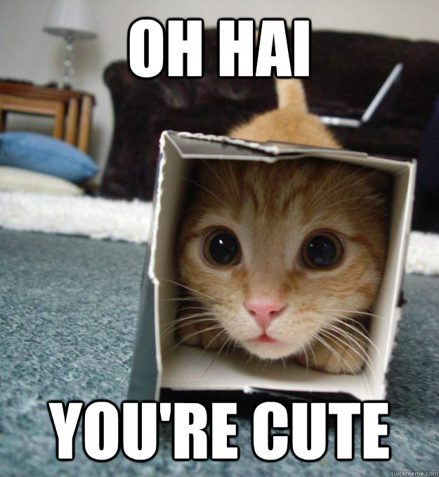 Funny Kittens Memes Oh hai You re cute
