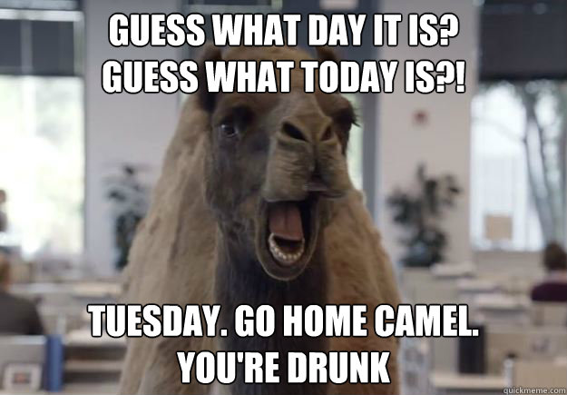 Guess what day it is?  Guess What today is?! Tuesday. Go home camel.  you're drunk