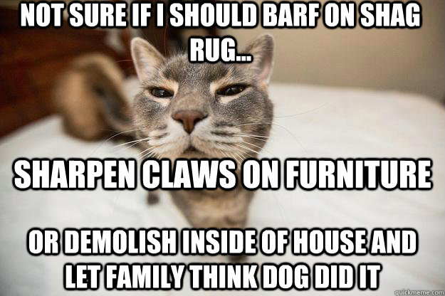 not sure if I should barf on shag rug...  or demolish inside of house and let family think dog did it Sharpen claws on furniture
