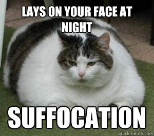 lays on your face at night suffocation  Fat Cat