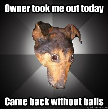 Owner took me out today Came back without balls - Owner took me out today Came back without balls  Depression Dog
