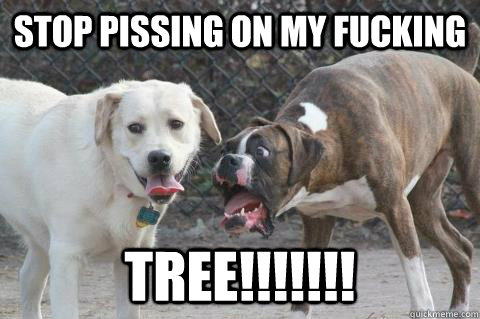 stop pissing on my fucking tree!!!!!!! - stop pissing on my fucking tree!!!!!!!  Shocked Dog