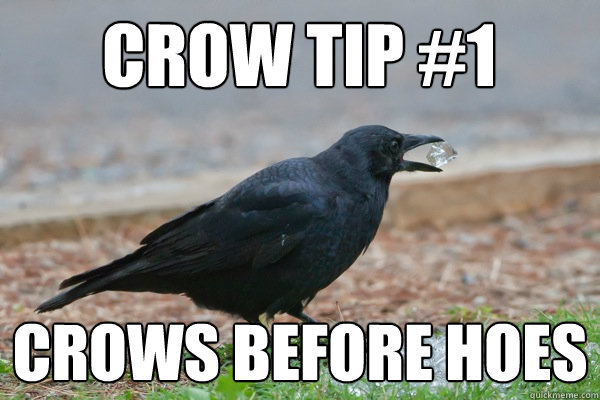 Crow Tip 1 Crows Before Hoes Crowtip Quickmeme