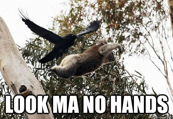 Top caption look ma no hands - Top caption look ma no hands  koala meme