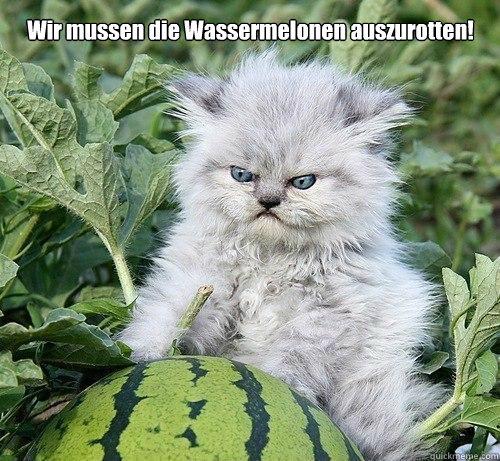 Wir mussen die Wassermelonen auszurotten!  German Kitty