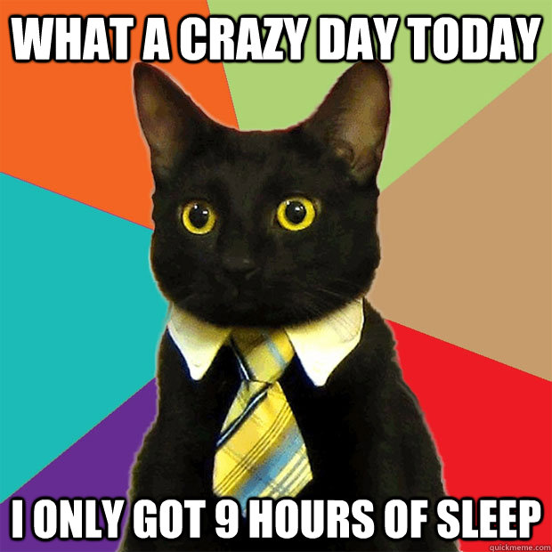 What a crazy day today I only got 9 hours of sleep - What a crazy day today I only got 9 hours of sleep  Business Cat