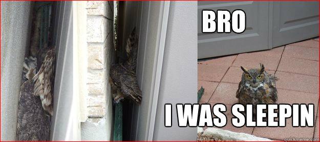 bro i was sleepin - bro i was sleepin  Woke up an Owl