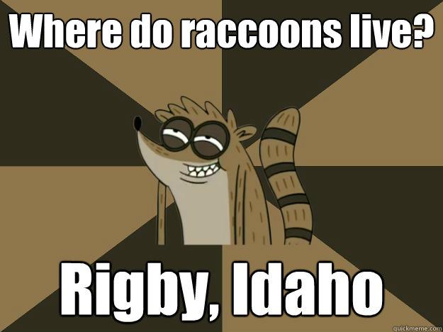 Where do raccoons live? Rigby, Idaho