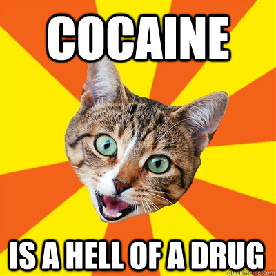 COCAINE IS A HELL OF A DRUG  Bad Advice Cat