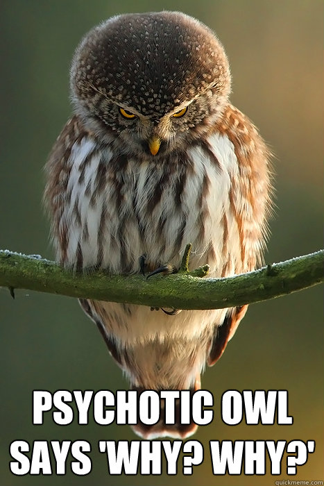 Psychotic Owl says 'Why? Why?'