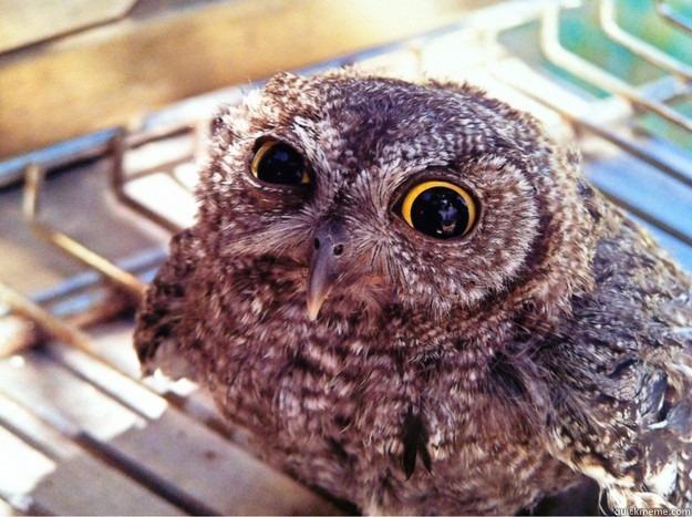 Skeptical Owl