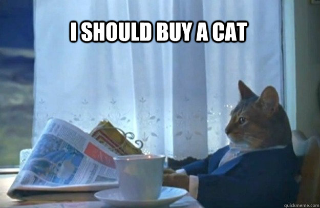 I should buy a cat - I should buy a cat  Sophisticated Cat