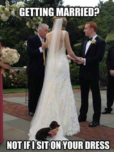 Getting married? Not if I sit on your dress - Getting married? Not if I sit on your dress  Overly Attached Dog