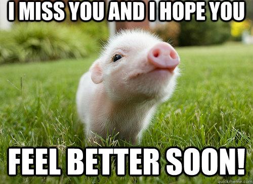 I miss you and I hope you Feel Better Soon! - I miss you and I hope you Feel Better Soon!  baby pig