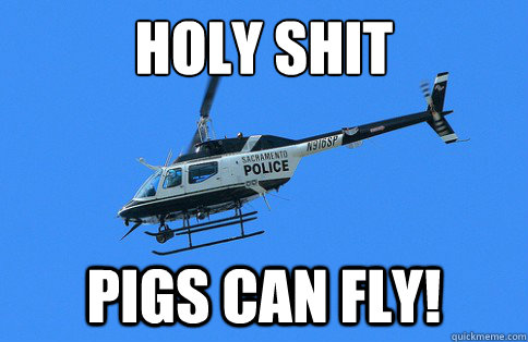 HOLY SHIT PIGS CAN FLY!