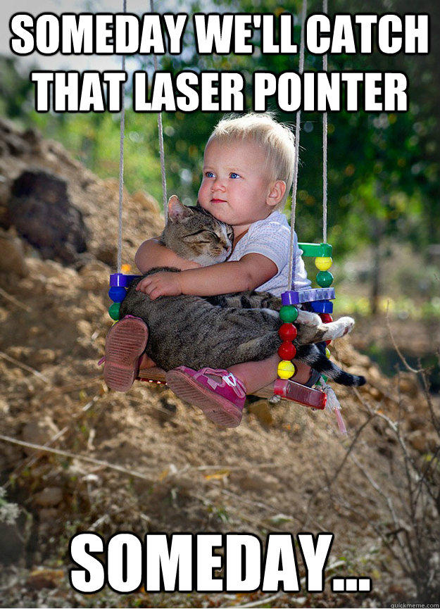 Someday we'll catch that laser pointer   Someday... - Someday we'll catch that laser pointer   Someday...  Someday