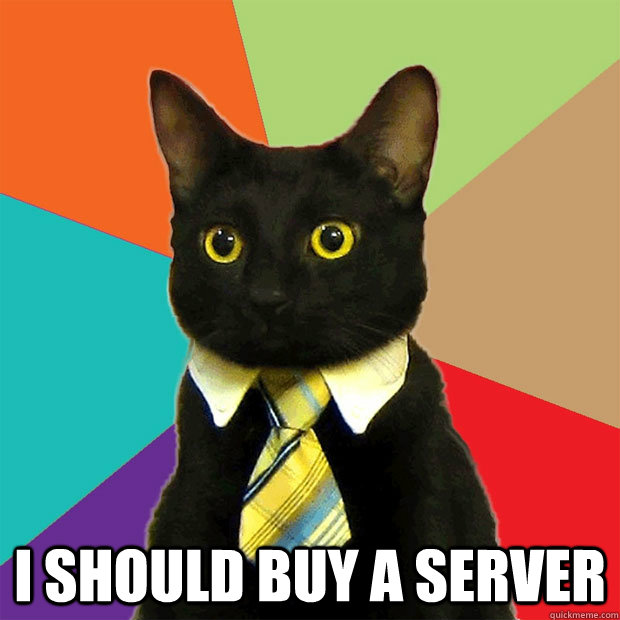 I should buy a server -  I should buy a server  Business Cat