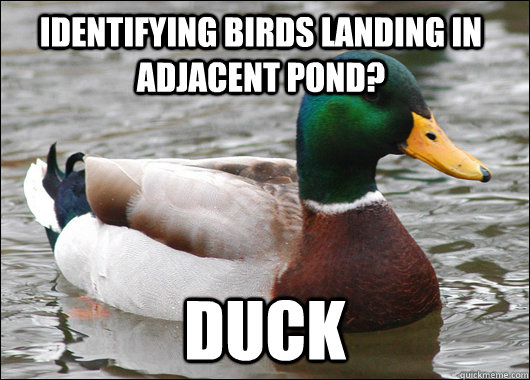 Identifying birds landing in adjacent pond? Duck - Identifying birds landing in adjacent pond? Duck  Actual Advice Mallard