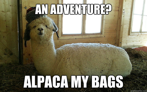 An adventure? alpaca my bags - An adventure? alpaca my bags  Llama