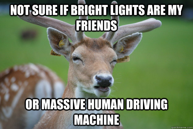 Not Sure if Bright Lights are my friends Or massive human driving machine