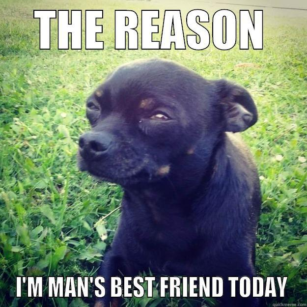 Man's best friend - THE REASON I'M MAN'S BEST FRIEND TODAY Skeptical Dog
