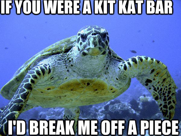 if you were a kit kat bar  i'd break me off a piece
