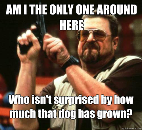 AM I THE ONLY ONE AROUND HERE Who isn't surprised by how much that dog has grown?