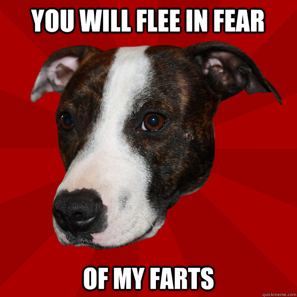 You will flee in fear of my farts  Vicious Pitbull Meme